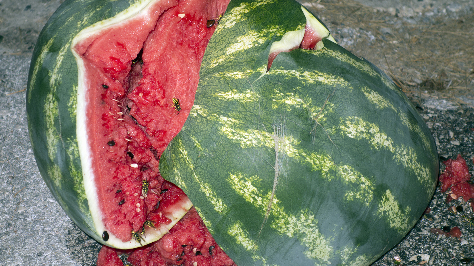 When Bad Watermelons Explode on Good People