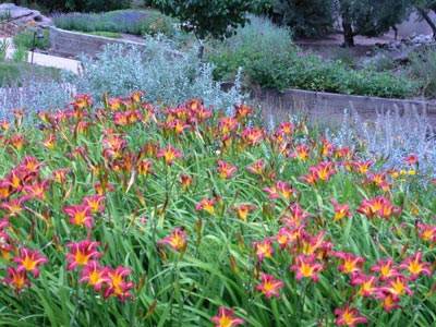 What Is Xeriscaping Howstuffworks