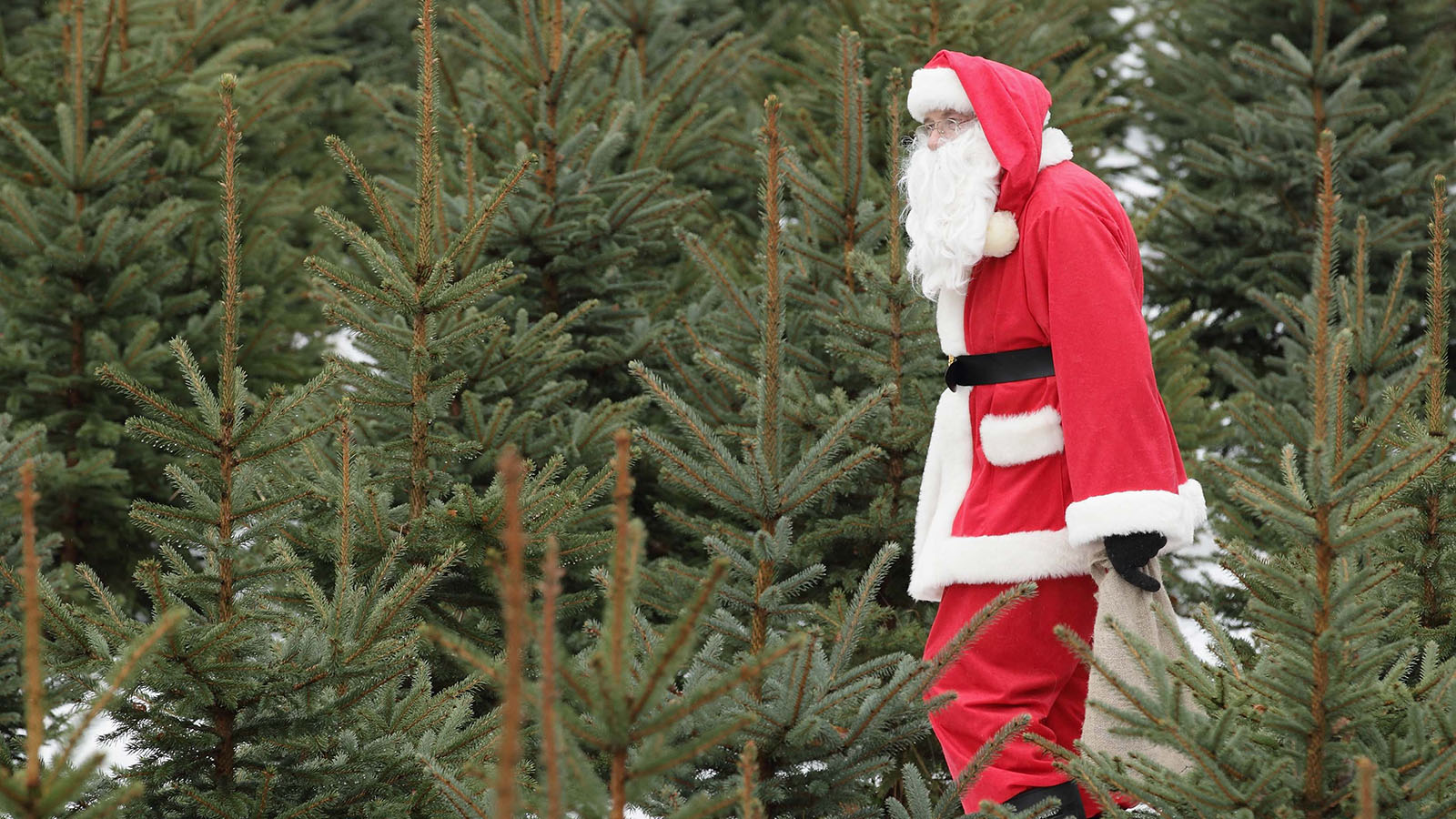 How Long Does It Take To Grow A Christmas Tree.How Do Christmas Trees Get Their Shape Howstuffworks