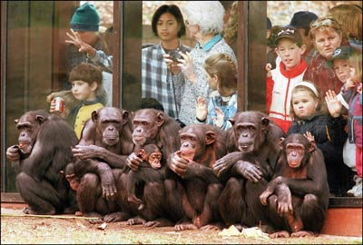 why zoos are important